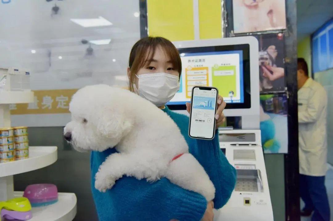 厦门市智慧养犬管理系统上线,打造养犬信息化管理和服务型平台